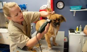 Pet Scene Grooming